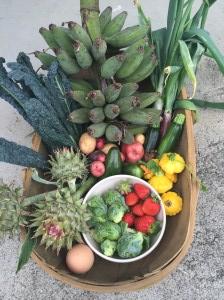 melissas-harvest