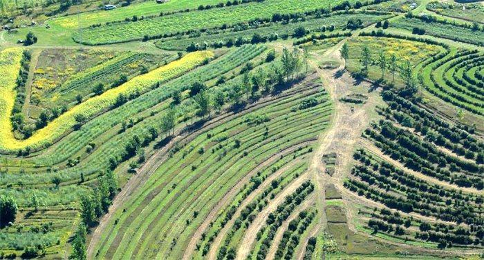 newforestfarm