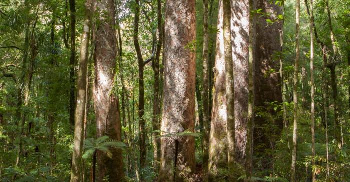 Northland forest