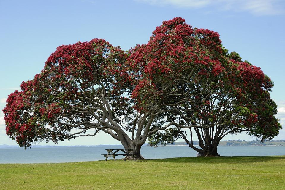 tree-141884_960_720